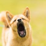 犬の吠え声 トラブル