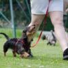 犬 コマンドトレーニング